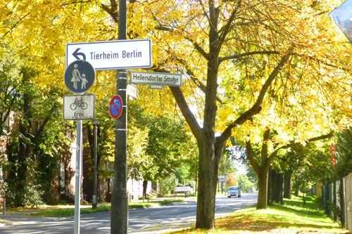 Khung cảnh sang thu tuyệt đẹp ở Đức 1