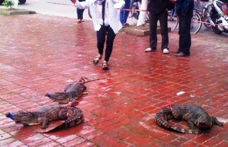 Bày bán, xẻ thịt cá sấu ngay trên hè đường 5