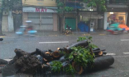 Mưa lớn, cây đổ, một người chết trên phố Hà Nội 1