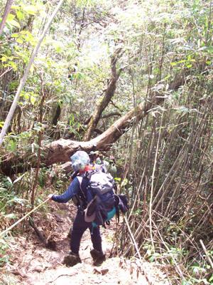 Một du khách mất tích khi leo núi Phan Si Păng 1