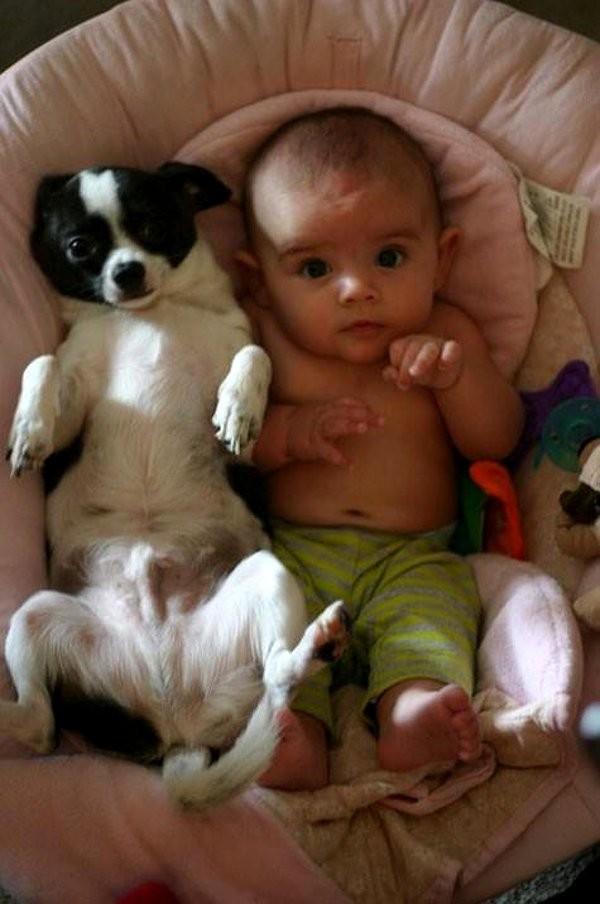 Chùm ảnh cực đáng yêu và hài hước về bé với cún con 11