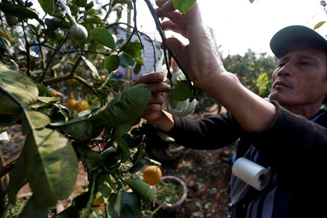 Cận cảnh vườn cây có 5 loại quả của lão nông Hà Thành 10