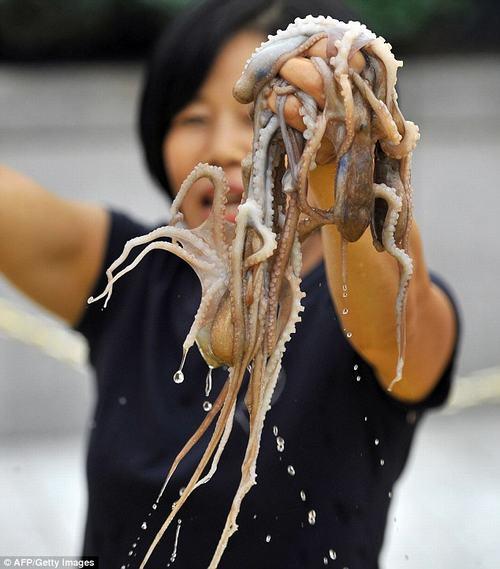 Rùng mình cảnh nhai ngấu nghiến bạch tuộc sống 2