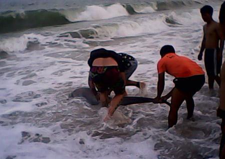 Lần đầu tiên cá mập trắng dạt vào bãi tắm Nha Trang 5