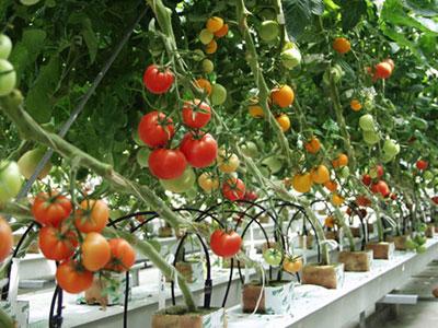 4 loại quả vị chua giúp bạn giảm cân nhanh 4