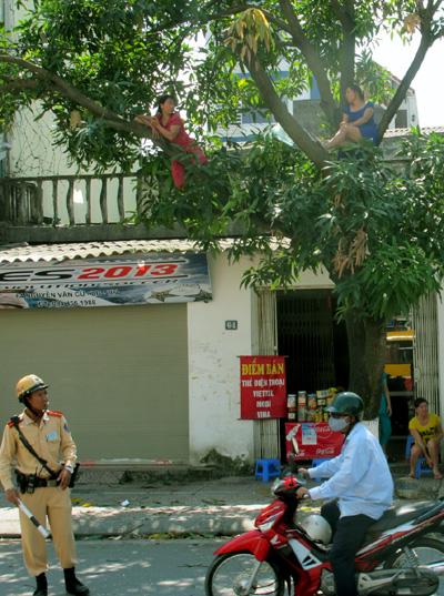 """Hà Nội: Hai phụ nữ """"cố thủ"""" trên cây để phản đối chặt cây 1"""