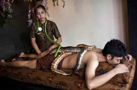 """Rợn người xem massage bằng rắn """"sung sướng trong sợ hãi"""" 2"""