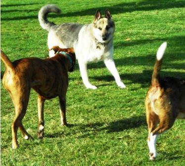 """Đòi bồi thường hơn 300 triệu đồng vì chó cưng bị """"cưỡng bức"""" 1"""