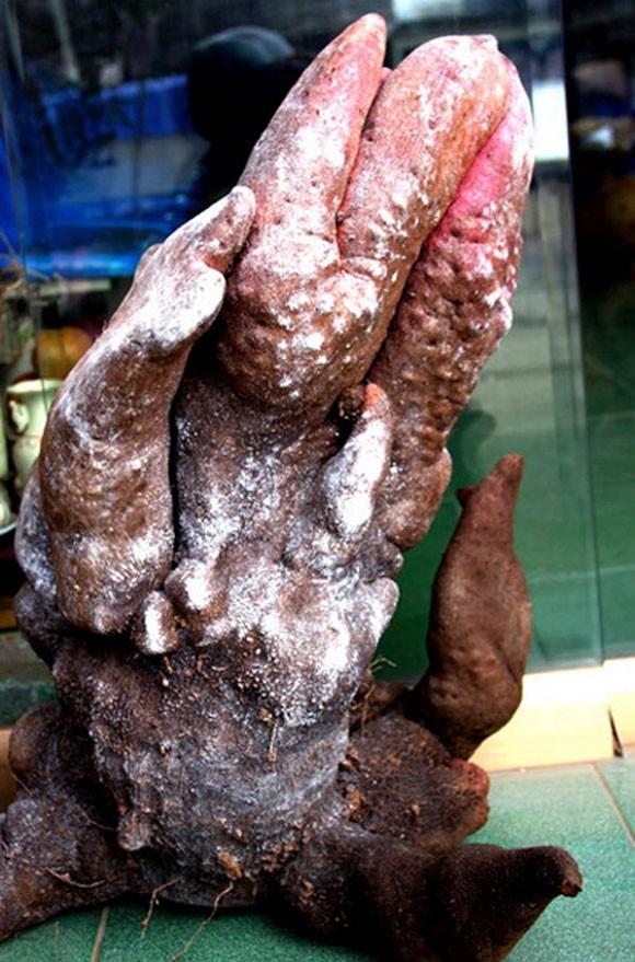 Những củ khoai lang kỳ dị, giá bạc triệu ở Việt Nam 7