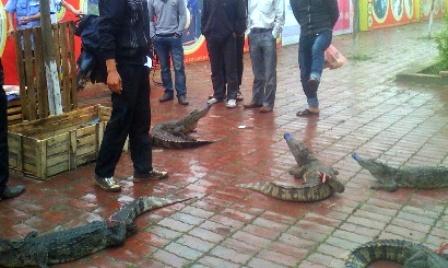 Bày bán, xẻ thịt cá sấu ngay trên hè đường 6