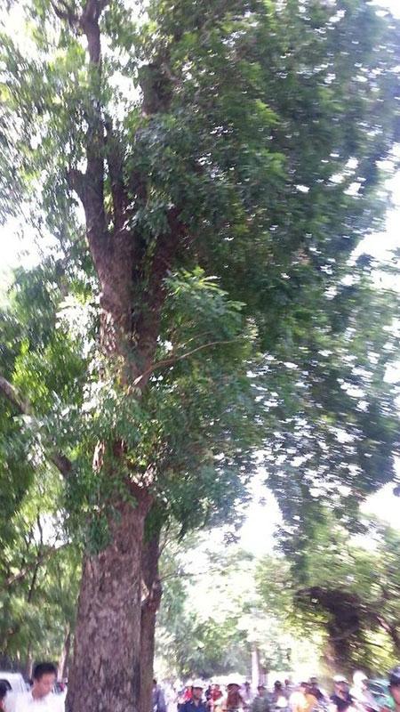 Đang đi đường, bị cành cây rơi trúng đầu tử vong ngay tại chỗ 1