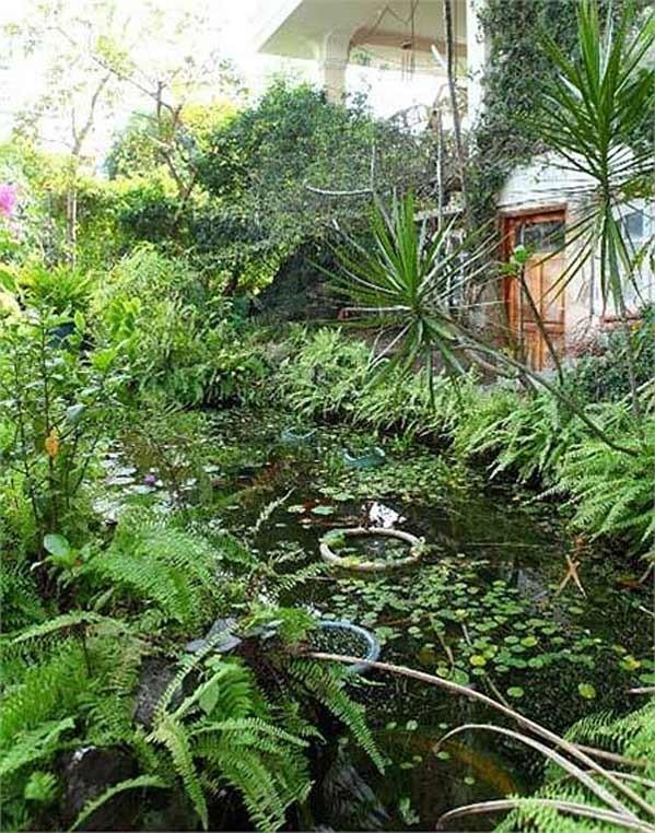 Nhà vườn, resort triệu đô của gia đình Á hậu Thiên Lý 28