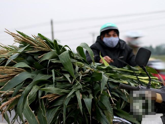 Những phụ nữ bán ngô luộc thu 30 triệu đồng/tháng 12