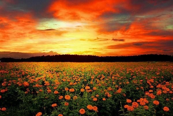 """""""Chết lặng"""" trước những thiên đường hoa lãng mạn trên thế giới 10"""