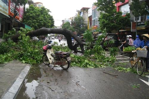 Cận cảnh sự tàn phá sau bão số 6 5