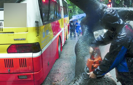 Cây đổ bẹp xe buýt đang chạy trong sáng ngày khai trường 5