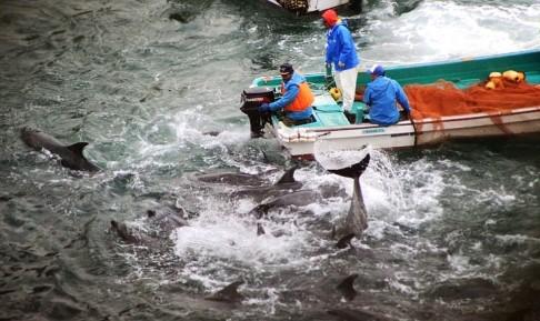 Hãi hùng nước chuyển sang màu đỏ vì thảm sát cá heo  1