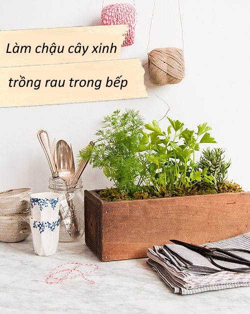 Làm chậu cây xinh trồng rau trong bếp 1