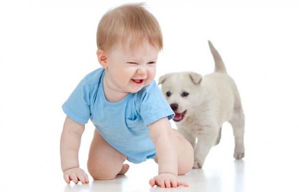 Chùm ảnh cực đáng yêu và hài hước về bé với cún con 5
