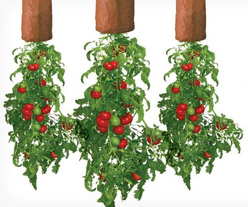Tự làm vườn treo trồng rau trong bếp 12