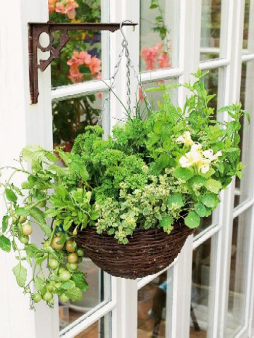 Tự làm vườn treo trồng rau trong bếp 11