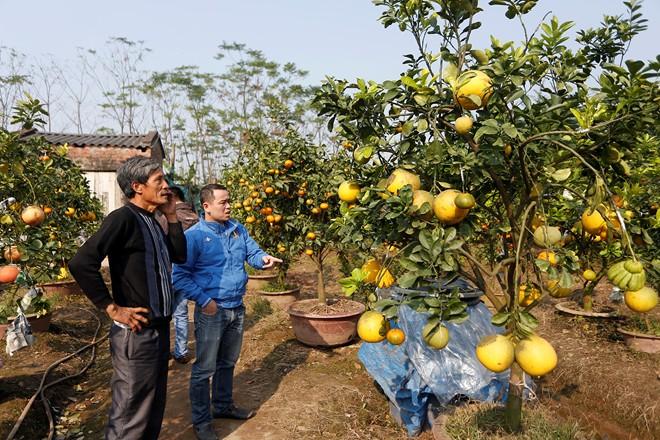 Cận cảnh vườn cây có 5 loại quả của lão nông Hà Thành 4