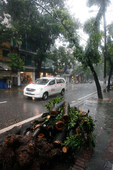 Mưa lớn, cây đổ, một người chết trên phố Hà Nội 6