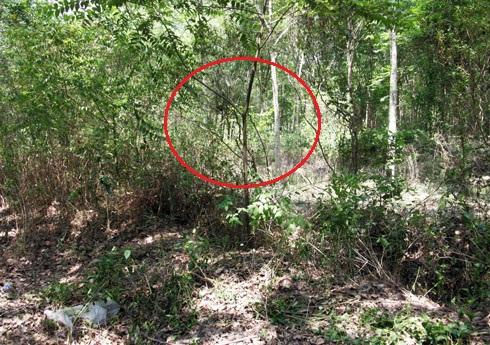 Vụ xác chết lõa thể treo trên cây: Nạn nhân bị cột chặt vùng kín 1