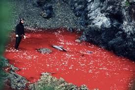 Hãi hùng nước chuyển sang màu đỏ vì thảm sát cá heo  6