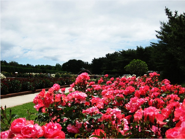 Ngất ngây 4 mùa ở thiên đường hoa Hitachi 7