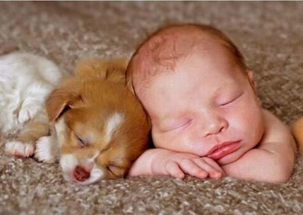 Chùm ảnh cực đáng yêu và hài hước về bé với cún con 6