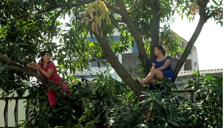 """Hà Nội: Hai phụ nữ """"cố thủ"""" trên cây để phản đối chặt cây 2"""