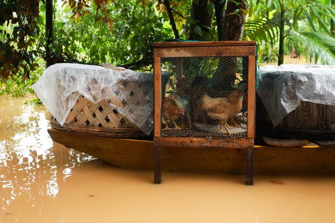 Nước lũ chạm mái nhà, dân Hà Tĩnh đói rét 9