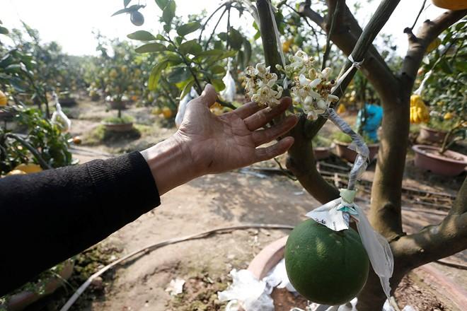 Cận cảnh vườn cây có 5 loại quả của lão nông Hà Thành 9