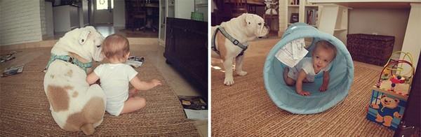 Tình bạn cực đáng yêu giữa cô bé 4 tuổi và chó cưng 16