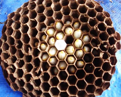 4 loại ấu trùng mê hoặc thực khách Việt 4