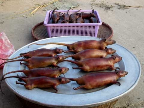 Buôn thịt chuột thu bạc triệu mỗi ngày 2