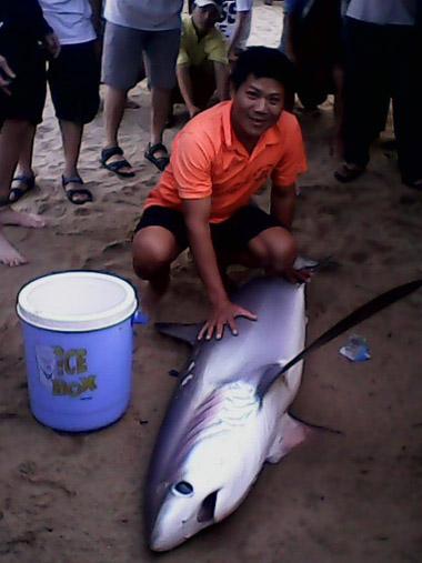 Lần đầu tiên cá mập trắng dạt vào bãi tắm Nha Trang 3