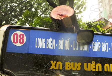 Cây đổ bẹp xe buýt đang chạy trong sáng ngày khai trường 3