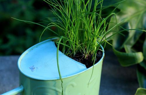 10 cách táo bạo trồng vườn hoa xinh lung linh 2