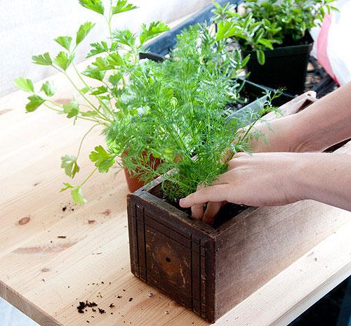 Làm chậu cây xinh trồng rau trong bếp 4