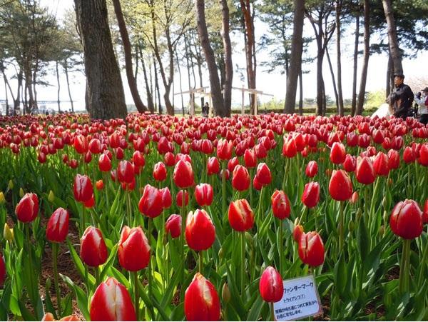 Ngất ngây 4 mùa ở thiên đường hoa Hitachi 3