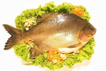 Những chuyện nên biết khi ăn cá 2