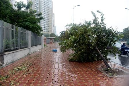 Hà Nội xáo trộn vì bão Haiyan 2