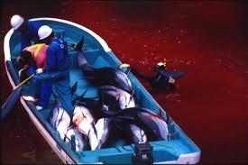 Hãi hùng nước chuyển sang màu đỏ vì thảm sát cá heo  4