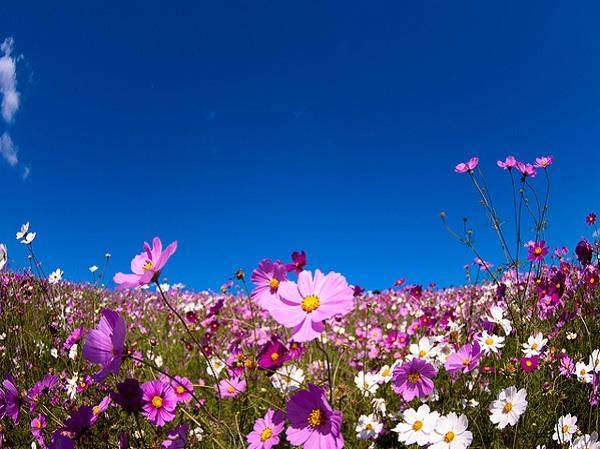 Ngất ngây 4 mùa ở thiên đường hoa Hitachi 11
