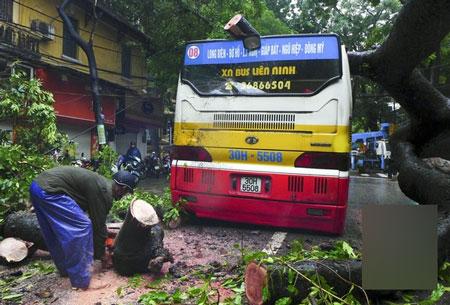 Cây đổ bẹp xe buýt đang chạy trong sáng ngày khai trường 2