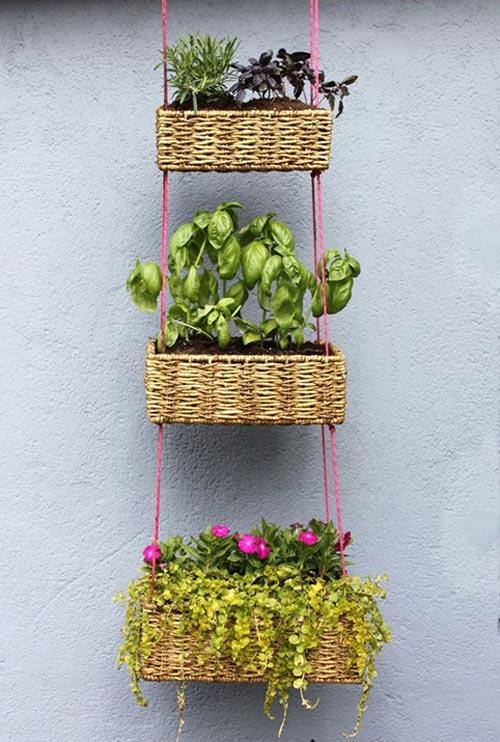 Tự làm vườn treo trồng rau trong bếp 10