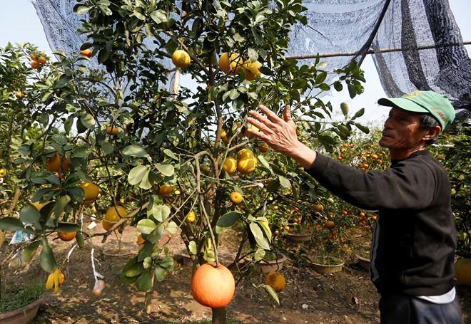 Cận cảnh vườn cây có 5 loại quả của lão nông Hà Thành 7