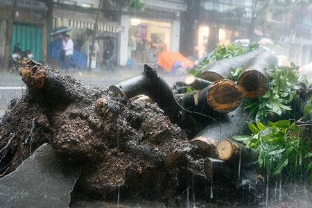 Mưa lớn, cây đổ, một người chết trên phố Hà Nội 3